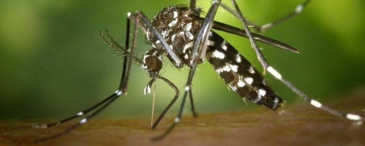 Picaduras de Mosquitos en Tenerife
